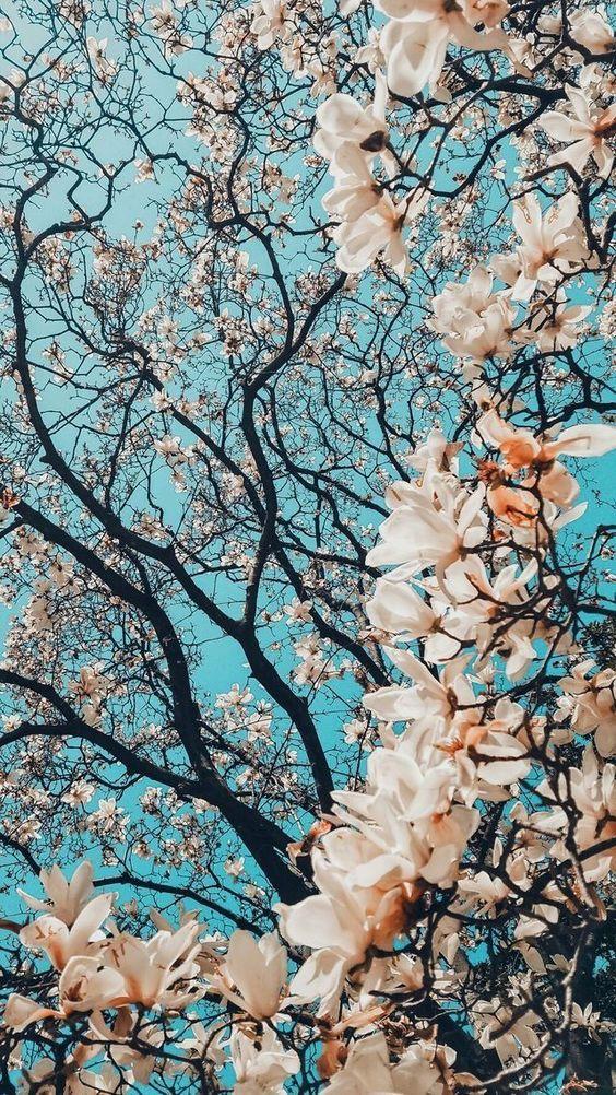 Çiçek Duvar kağıdı,Telefon duvar kağıtları